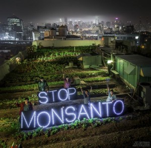 STOP MONSANTO FB image